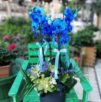 mavi orkide kombini